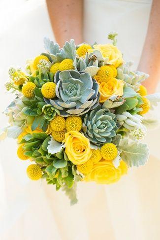 fiori primaverili succulente
