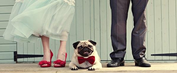 consigli per cane al matrimonio